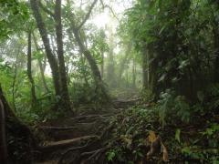 Cerro Chato Trail
