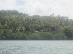 Rio Miel